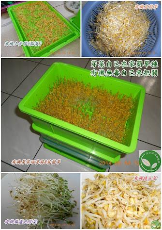 太平洋有機 有機芽菜培育箱 有機芽菜機 芽菜 毒豆芽