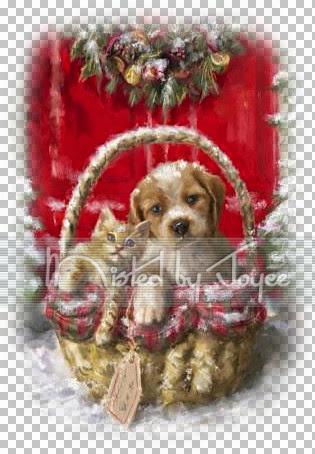 Puppy_and_Kitten_MartiChristmas05_JG.jpg