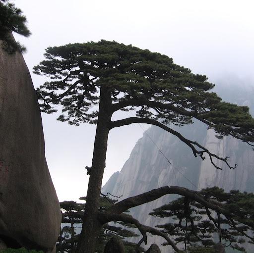 Bing Dai Photo 3
