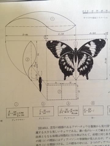 蝶のデザイン