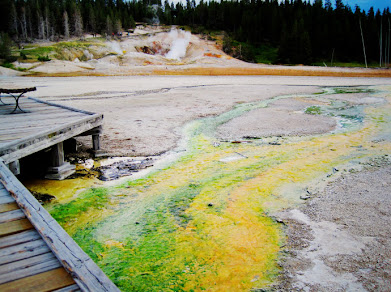 Norris Geyser Basin Color