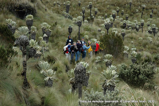 Reserva Ecológica de El Angel desde Imbabura