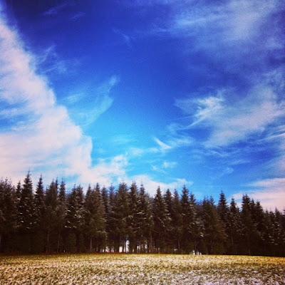 snow, Limousin, Creuse, winter, pine trees, forest, France, de tout coeur limousin