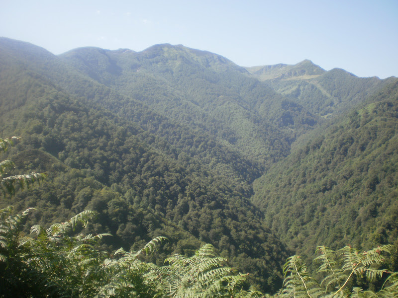 Ruta Bosque de Valgrande