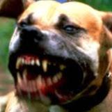 ClydeHellhound