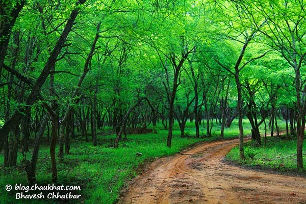 Forest trail of Ranthambhore National Park