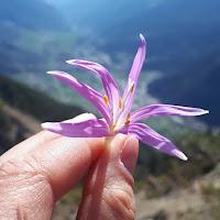 Foto del profilo di Chiara