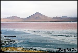 Un mois aux pays des Incas, lamas et condors (Pérou-Bolivie) - Page 3 CD3%2520%252829%2529