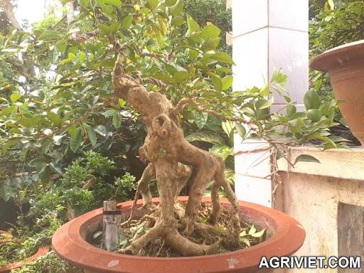 Agriviet.Com-nq_2.jpg