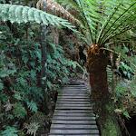 Small bridge and fern (51755)