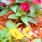 Maram Mrmr avatar image