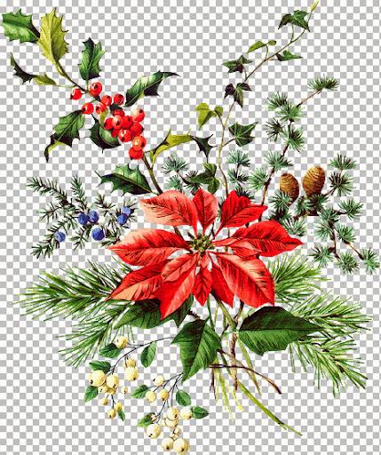 AMT~Poinsettiasm_KK (2).jpg