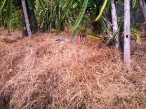 Herbisida menjadi ampuh sebagai pembunuh rumput dan gulma berkat Solut-ion