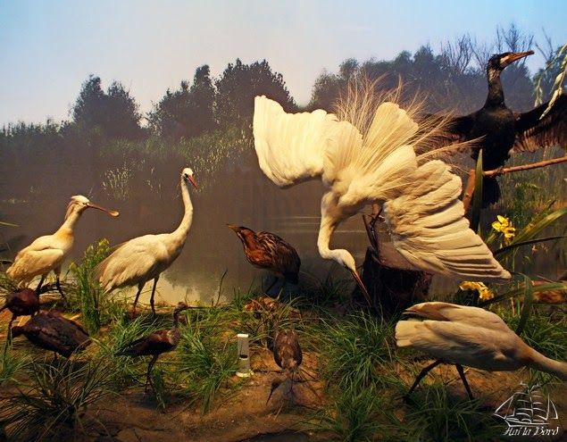 delta dunarii muzeul antipa bucuresti