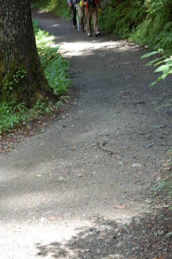 徳沢横尾間の広い林道の写真