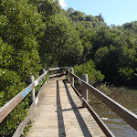 salt pan creek boardwalk (77293)