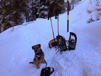 Border Terrier Charly wartet auf den Start des Schneeschuhtrail