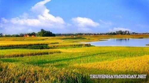 Hình ảnh những cánh đồng quê đẹp miên man bất tận