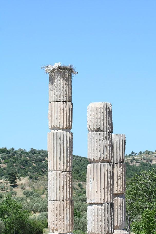 аисты, храм Аполлона