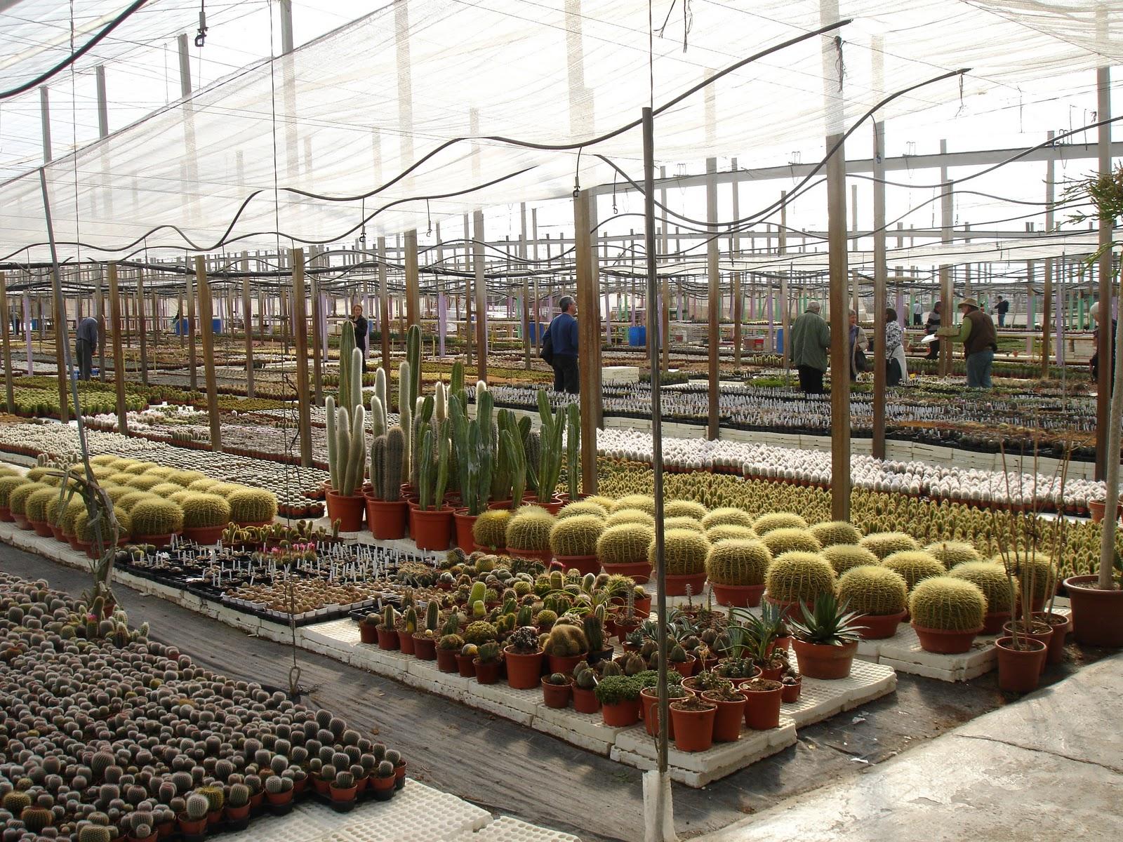 La casa de los cactus visita al vivero de paco serrano for Vivero de cactus