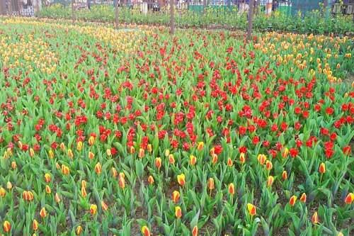 den tham vuon hoa nhiet doi moc chau%2B%283%29 Đến thăm vườn hoa nhiệt đới Mộc Châu
