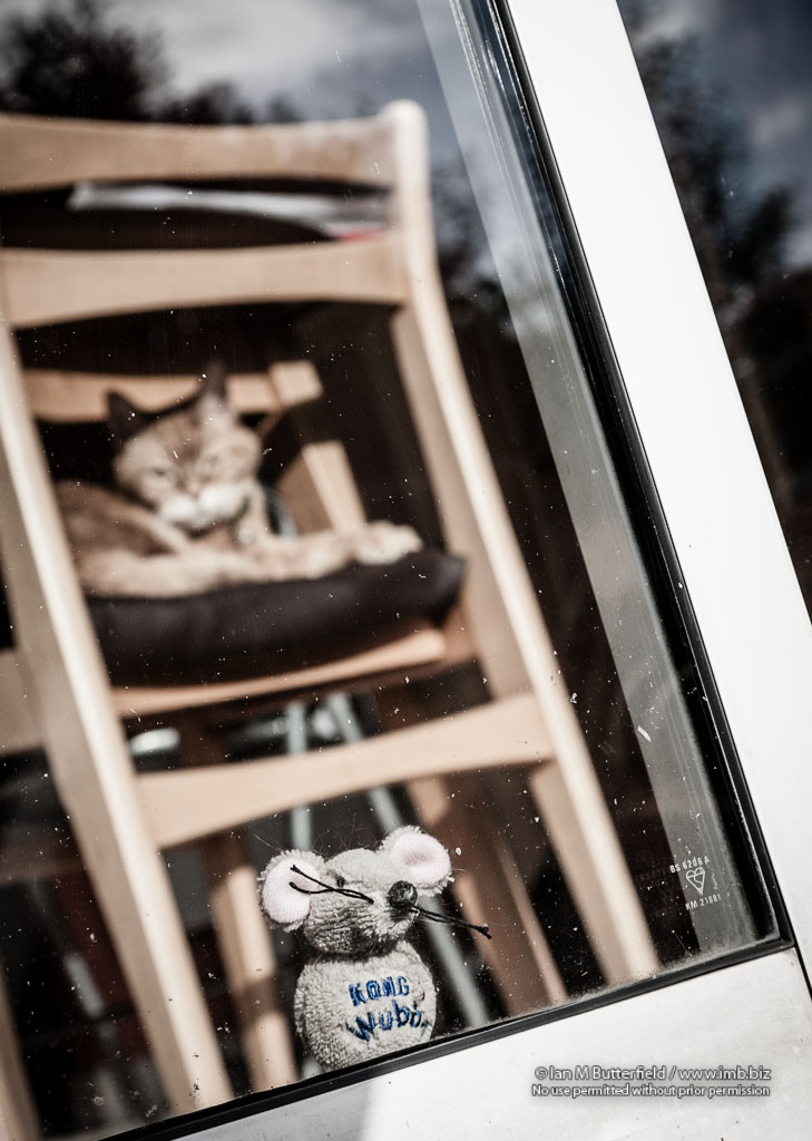 POTD Thursday, 27 Jan 2013 : A toy mouse looks out of a window while being watched…