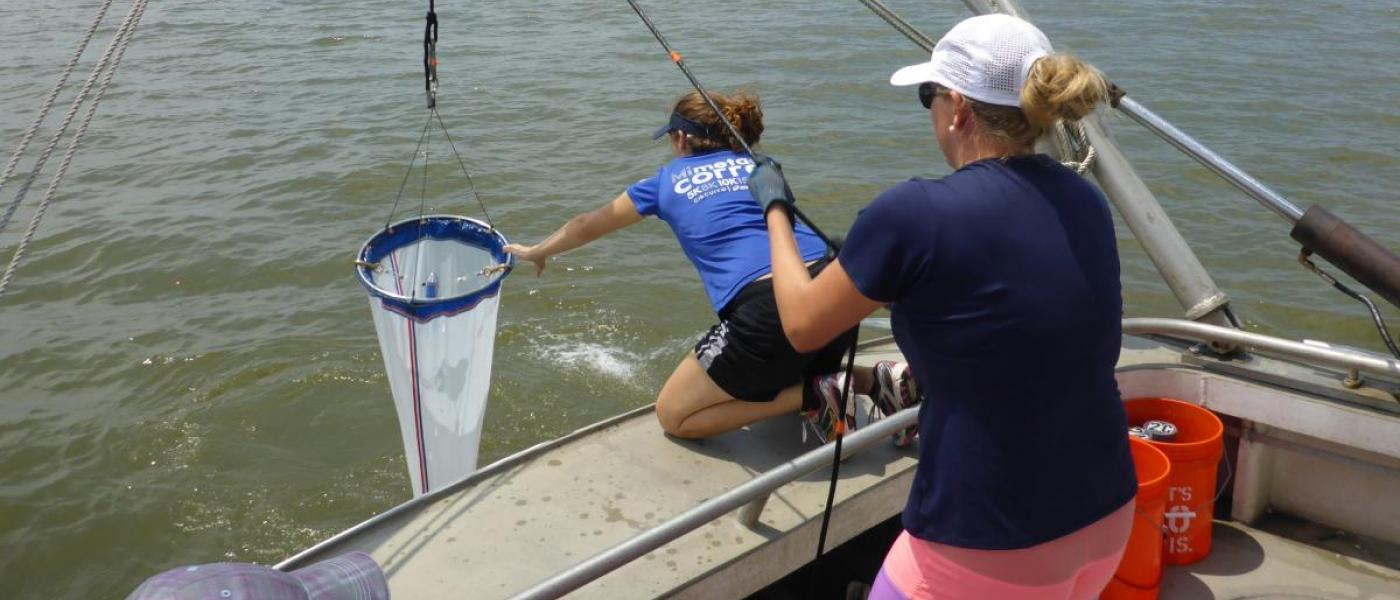 SERC Scientists using a plankton net (Photo: Kristin Larson)