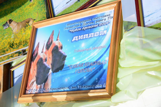 Кубок Аризоны-14(ПК)+ЧРКФ, Красноярск, 27 апреля 2014 DSC_5385