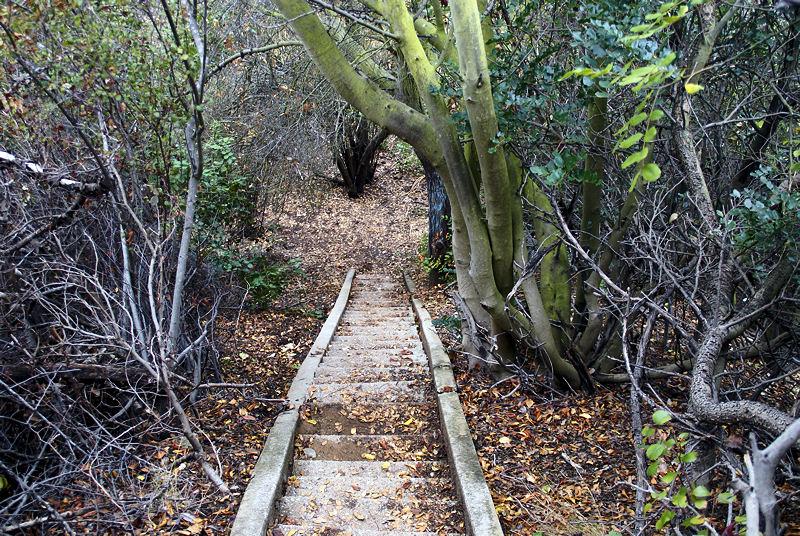 Конец лестницы, ведущей ко дну Растик каньона