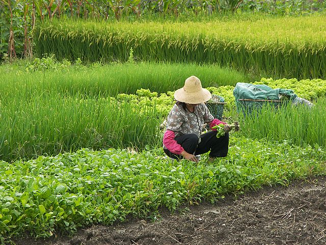 an analysis of chinese farmer life in the good earth by pearl s buck Buy a cheap copy of the good earth book by pearl s buck pearl s buck's  pearl buck was more chinese  many other things occupy wangs life, but the earth is.