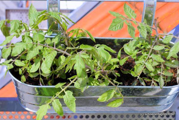 Saisonkalender Rezepte für heimisches Obst und Gemüse im Juni