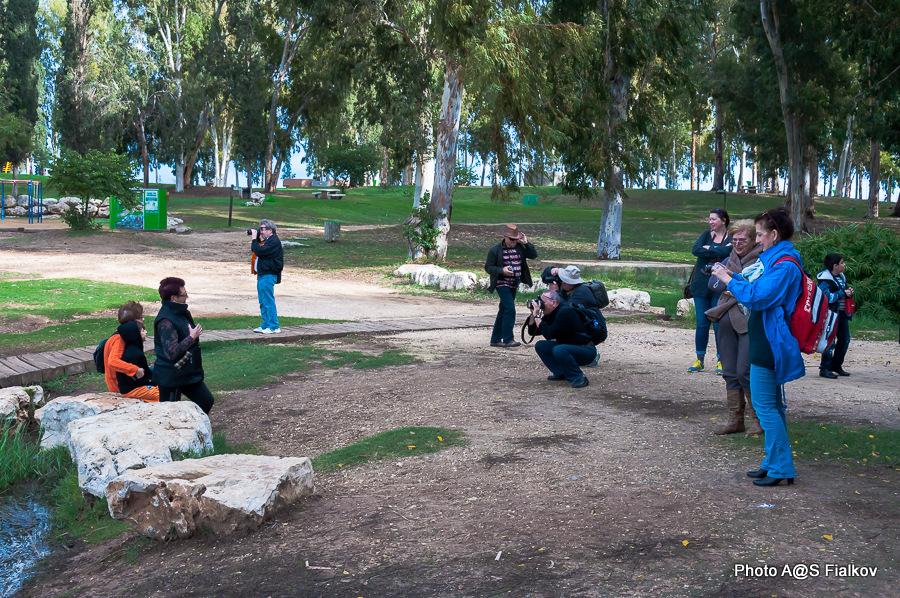 Парк Афек. Экскурсия по реке Яркон в Тель Авиве и Яффо. Гид в Израиле Светлана Фиалкова.