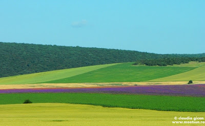 Dealurile Dobrogei: campuri de flori si paduri de tei