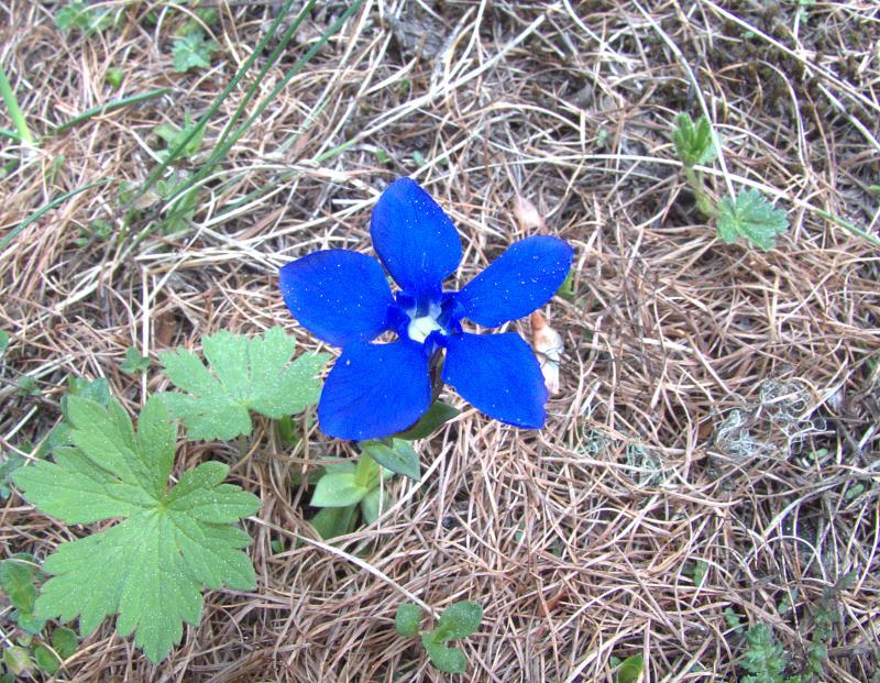 flower 6_rsz.jpg