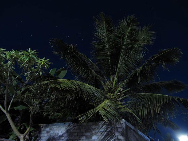 palmeras y cielo