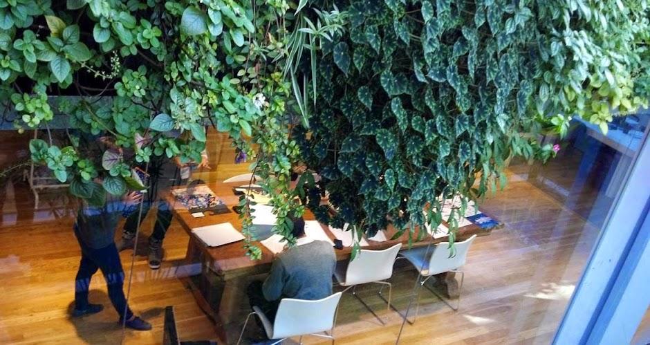Begonias jardín vertical Argentina