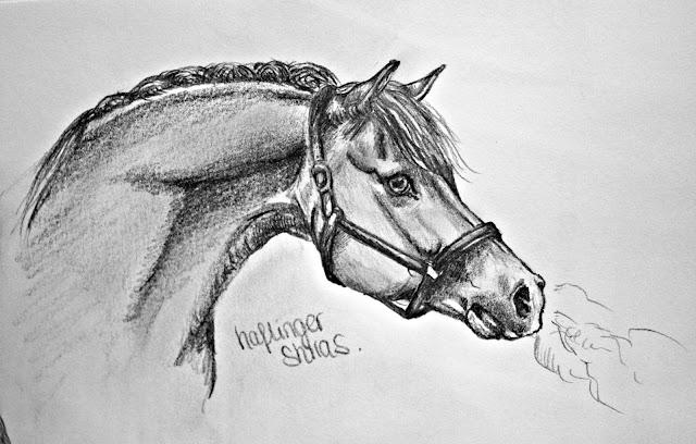 Goede INFO] Resultaat topic paarden tekenen #6 • Bokt.nl MG-38