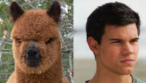 The Dude From Twilight Looks Like An Alpaca:celebrities0