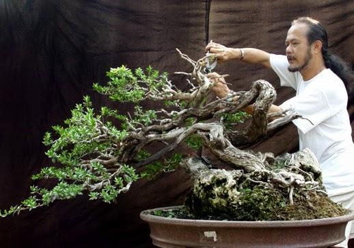 bonsai nhật