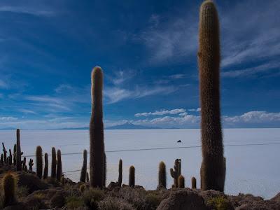 Cactus gegants a l'illa d'Incahuasi, amb el volcà Tunupa al fons, darrere el Salar