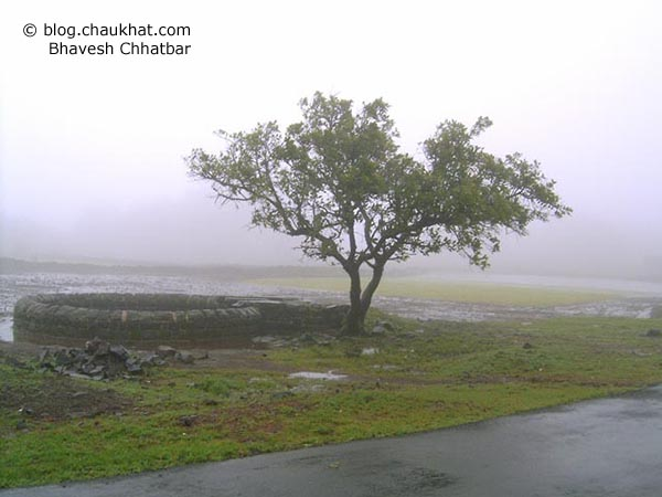 A beautiful roadside tree and a well in the mist of the monsoon time in Bhimashankar where the forest doesn't see the sun for 3 months every year