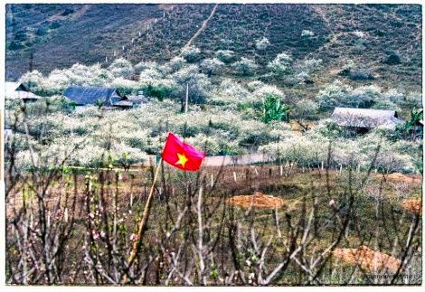 hoa man moc chau pys travel006 Mộc Châu mùa xuân   Thiên đường mận trắng