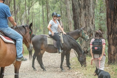 dandenong horse riding