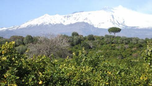 Schnee-bedeckter Ätna mit Rauchfahne vor Zitrusbäumen, Sizilien, Italien