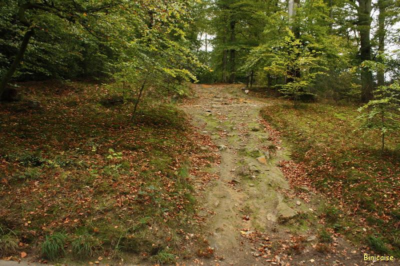 Forêt d'Andaines en automne. dans Normandie