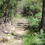 Steps on Lindfield Park track (126151)