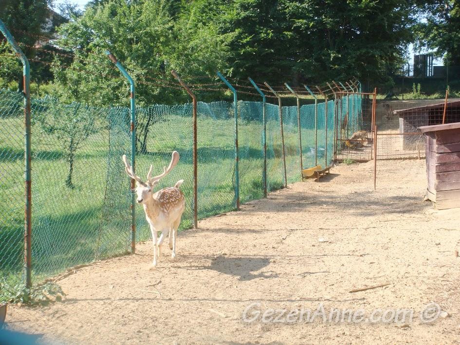 Polonezköy Piknik Park'taki ala geyik