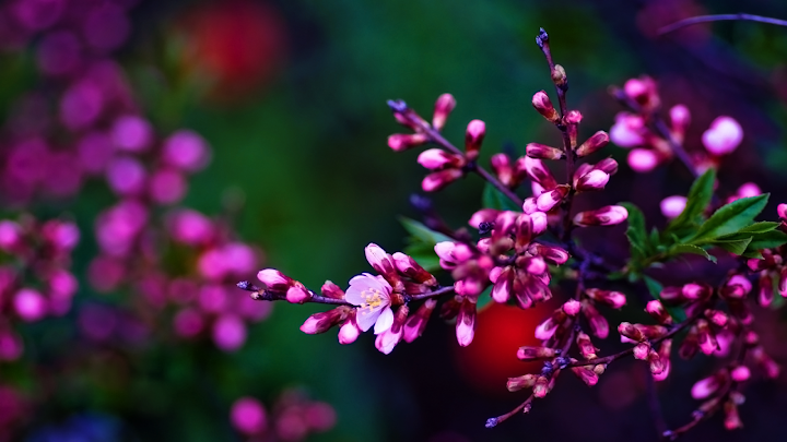 branch of spring flowers wallpaper