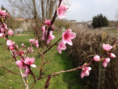 French village diaries silent sunday photos peach blossom