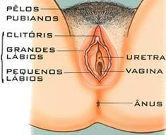 Em quantos centímetros é possível aumentar um pênis